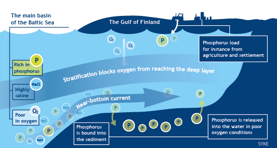 Cycle of Phosphorus in the Gulf of Finland