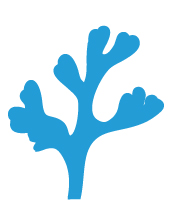 Plan4Blue project seaweed illustration (small)