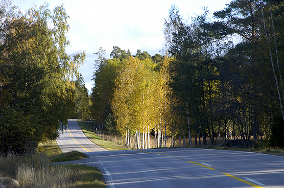 Autumn road view