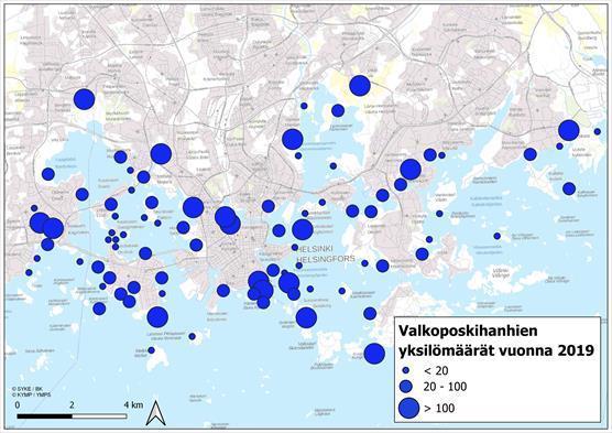 Valkoposkihanhien yksilömäärien jakaantuminen Espoossa ja Helsingissä 31.7.2019