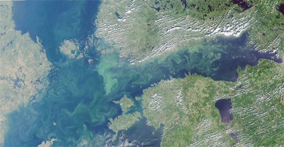 The Baltic Sea (Gulf of Finland and parts of the Archipelago Sea) have seen exceptionally broad blooming of blue-green algae. Situation on 16 July 2018